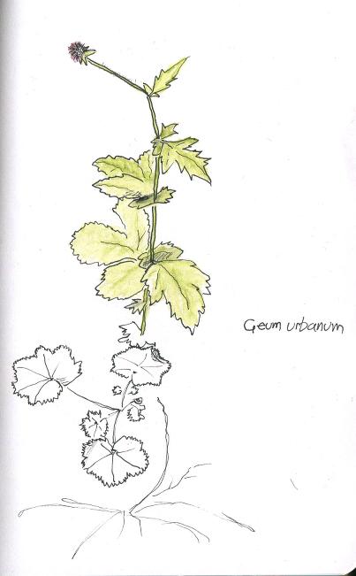 geumurbanum